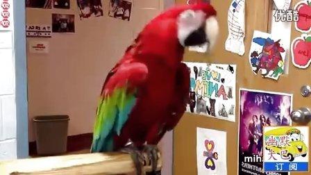 搞笑视频,看大鹦鹉疯狂的舞姿,绚丽多彩,佩服。