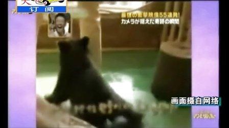搞笑视频,熊宝宝被小猴子吓得浑身哆嗦,笑死了