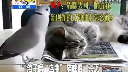 搞笑视频,小猫要睡觉,鸽子却想唱歌把猫吵醒,笑死了。