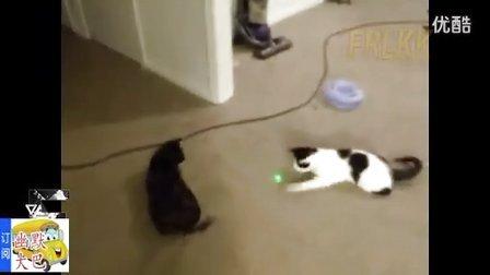搞笑视频,笑抽了,激光把小动物们给玩迷糊了