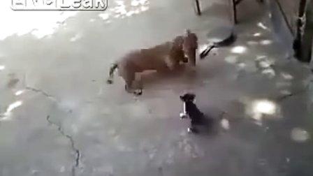 搞笑视频,狗狗欺负猫宝宝,被猫妈妈秒杀打败