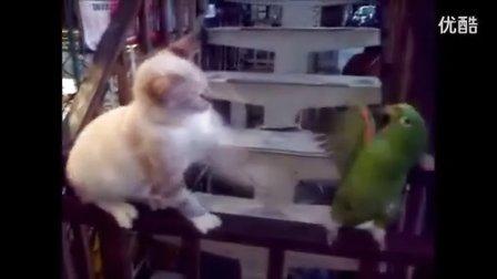 搞笑视频,鹦鹉和小猫逗乐,好玩。