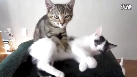 搞笑视频,小猫咪搞笑视频大联欢,太萌了。