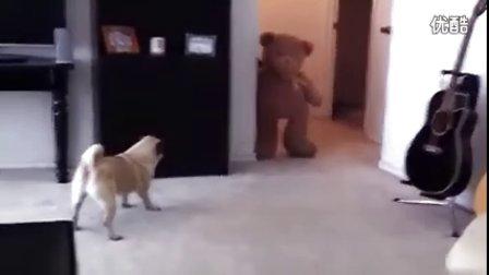 搞笑视频,用抱枕熊吓唬小狗,把小狗吓得拉出屎来了