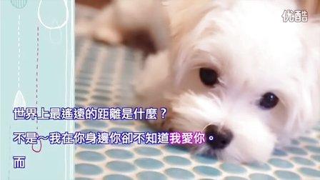 狗狗說:世界上最遙遠的距離是?食物近在眼前卻不能吃!Puppy learning to discipline