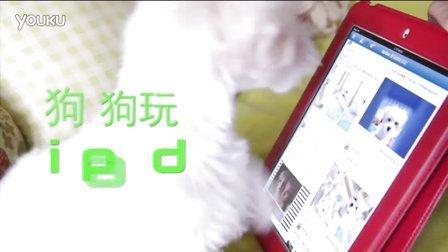 好厲害!我家小狗會玩 iPad 之 瀏覽 Facebook My Puppy plays on iPad!