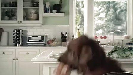 搞笑视频,狗偷食主人东西,拿小猫当替罪羊,可乐。