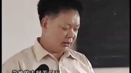 广东省农科院蔬菜种子丰绿苦瓜,百蔬网,www.maiseed.com
