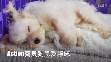 超可愛~狗狗四腳朝天愛賴床 - Action Cute Puppy Lying in his bed!-2