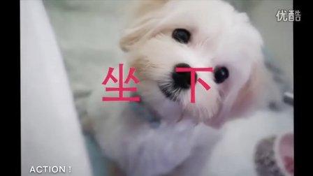 【沛莉寵物】訓練狗狗坐下、趴下,只要半小時。30 min train your Dog to sit and lay