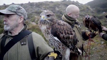 獵奇 苏格兰高地的猎鹰人