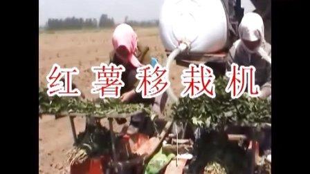 三垄三行红薯苗移栽机 红薯、紫薯、甘薯、秧苗种植机械 河南红薯种植技术