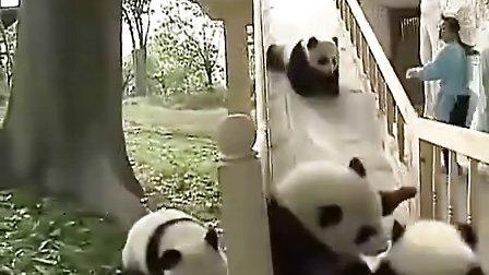 超萌,熊猫宝宝和美女一起玩耍,好可爱