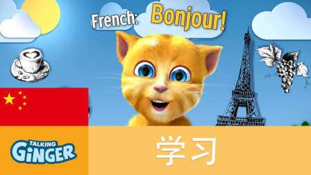 会说话的金杰猫教你用各国语言打招呼 1