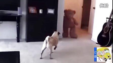搞笑视频,抱枕狗熊把狗狗吓得拉粑粑了