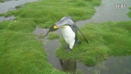 帝企鹅囧境