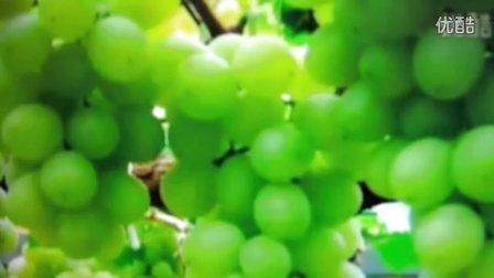 学唱---吐鲁番的葡萄熟了