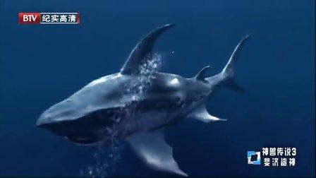 神兽传说之斐济鲨神