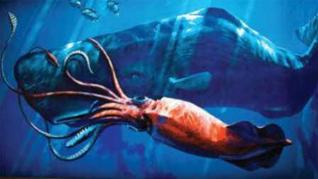 第44期 吓尿!20米深海巨怪竟猎杀鲸鱼