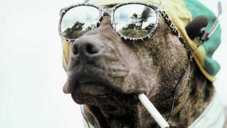 《乒乓神狗》湿父的侦探狗 倒车狗 超可爱