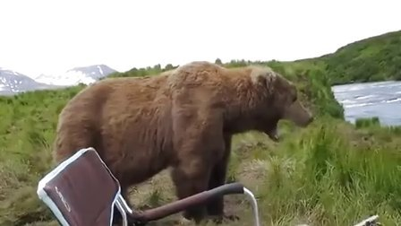 【极酷花园】太恐怖了...露营者遭遇有好奇心的『阿拉斯加棕熊』