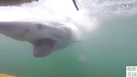【极酷花园】神速啊!! 『大白鲨』为吃人突袭潜水笼【惊魂一刻】