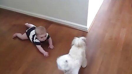 萌翻!狗狗精湛舞技让宝宝狂笑不止
