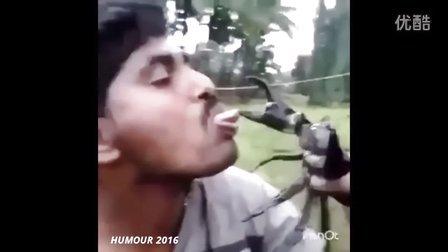 2016年最喜剧幽默搞笑动物集锦