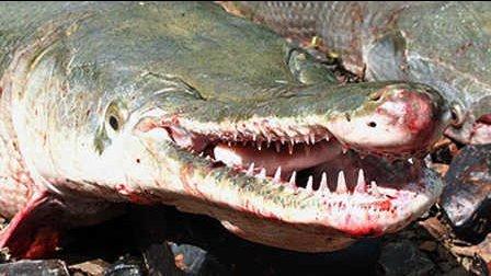 第47期 世界最毒怪鱼竟吃人成性!
