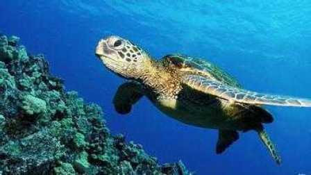 最美丽的大自然【八】海洋世界