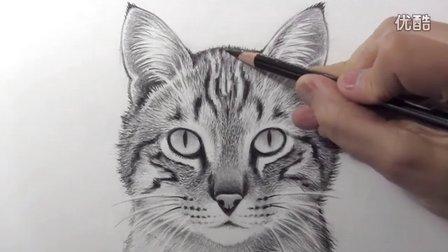 如何画猫,素描绘画教程