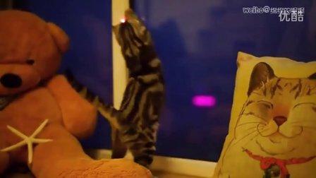 萌宠搞笑 可爱猫咪追红点 哪只喵星人能够割舍小红点!?