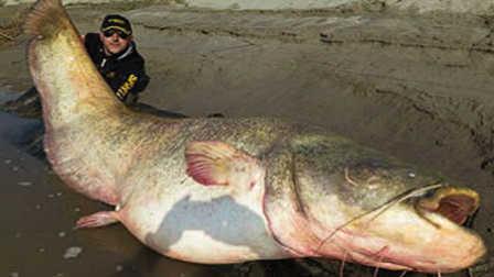 第49期 变异食人鱼竟活吞人类头颅!