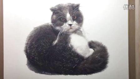 油性彩铅-蓝白色苏格兰折耳猫灰哥-XL