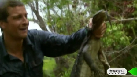 贝尔荒野求生11:活捉巨型蜥蜴
