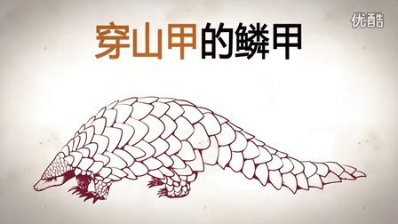 公益宣传片:穿山甲科普动画片