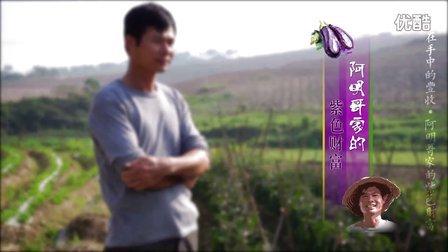 【茄子】阿明哥家的紫色财富 |《握在手中的丰收》[理疗达人]