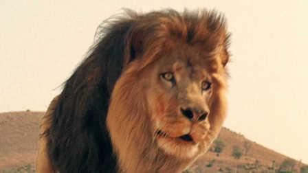 狮子纪录片