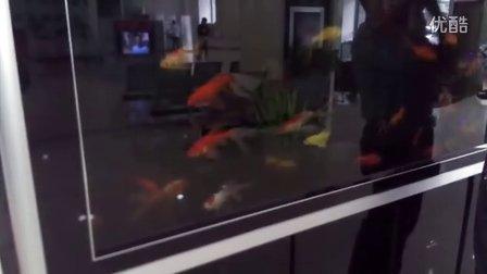 在银行看到的金鱼