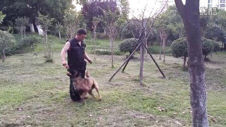 ck训练视频