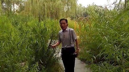 高老迷在北京〈柳荫公园〉唱〈卖苗郎〉选段〈牛恋老糟马恋圈〉VID_20160606_155034