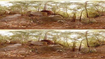 【360°】危险动物的世界