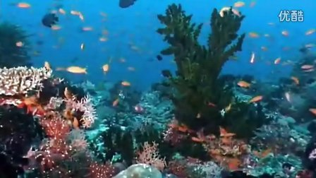 马尔代夫的海底世界