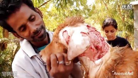 国外公益组织救助流浪狗视频