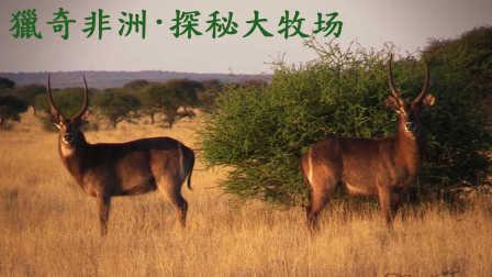 獵奇 第一百一十三集  狂野非洲之探秘非洲土豪大牧场
