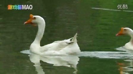鹅 鹅 鹅  儿歌 唐诗 大白鹅戏水 实拍小动物 奇趣动物园 两只老虎小燕子小白兔 游戏猫