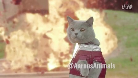 Aarons Animals Iron Cat 2