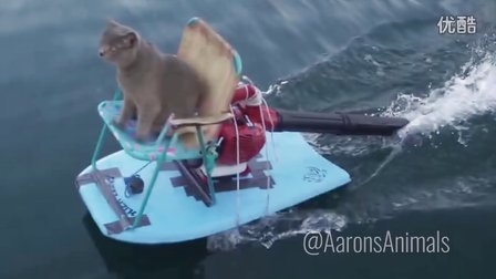 Aarons Animals Homemade Jet Ski