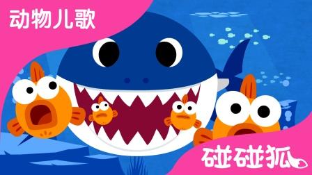 鲨鱼一家 (Baby Shark) | 动物儿歌 | 碰碰狐!动物儿歌
