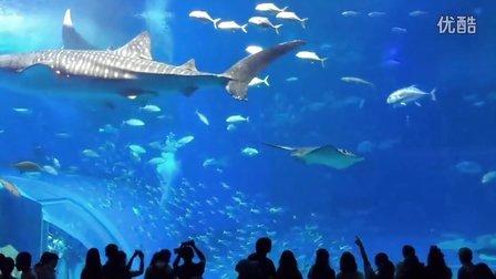 《携手人生记录片》第三十一集 冲绳美丽海水族馆